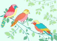 Heldere vogels die op een tak zitten Royalty-vrije Stock Foto's