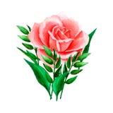 Heldere waterverfsamenstelling van roze, koraalrozen en bladeren Malplaatje voor hand-drawn huwelijksuitnodigingen, geïsoleerd o vector illustratie