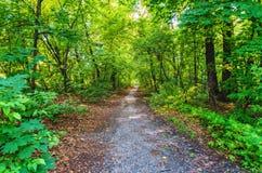Heldere weg bij het de zomerbos stock afbeelding