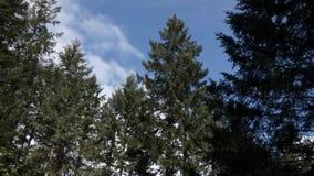 Heldere witte wolken die zich over hemel in de zomerdag bewegen stock videobeelden