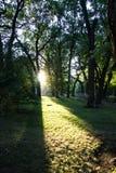 Heldere zon Stock Afbeeldingen