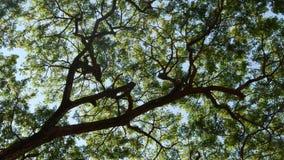 Heldere zon achter boomtakken Stralen die van heldere zon door bladeren en takken van bomen glanzen stock footage