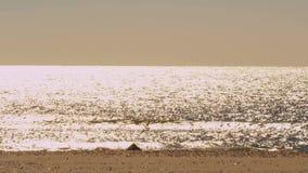 Heldere zon oceaanglimmer stock video