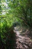 Heldere Zon op Forest Path Royalty-vrije Stock Afbeeldingen
