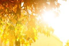 Heldere zonnestraal door bladboom stock afbeeldingen