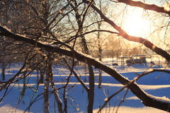 Heldere zonnige de winterochtend Royalty-vrije Stock Foto's