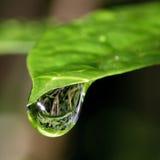 Heldergroen blad met grote weerspiegelende regendruppel Stock Afbeelding