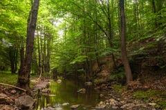 Heldergroen bos boven een rivier Stock Foto's