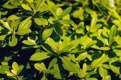 Heldergroen gebladerte en grasclose-up Vegetatie in Turkije De textuur van greens royalty-vrije stock afbeeldingen