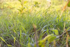 Heldergroen gras stock foto's