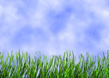Heldergroen gras op een blauwe hemelachtergronden Stock Foto