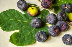 Heldergroen vijgeblad met rijpe donkere purpere bessen van de vijgeboom Royalty-vrije Stock Foto