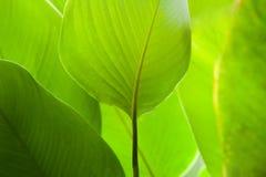 Heldergroene blad dichte omhooggaand, textuur Stock Foto