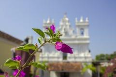 Heldergroene bladeren en verse roze tropische bloemen op een tak tegen een vage achtergrond van een witte Katholieke kerk onder a royalty-vrije stock foto's
