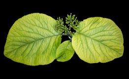Heldergroene bladeren op de tuin macroachtergrond Royalty-vrije Stock Afbeeldingen