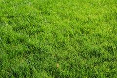 Heldergroene Grasachtergrond vers groen grasgebied Groene grastextuur voor druk, Webgebruik, affiches en banners royalty-vrije stock foto's