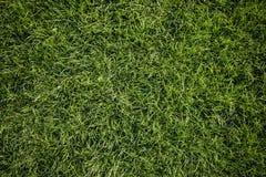 Heldergroene Grasachtergrond vers groen grasgebied Groene grastextuur voor druk, Webgebruik, affiches en banners royalty-vrije stock afbeelding