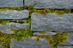 Heldergroene mostextuur op de steenbakstenen muur Fotodepicti Royalty-vrije Stock Afbeeldingen