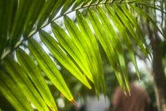 Heldergroene palmbladen, Kew-Tuinen, Londen Royalty-vrije Stock Afbeeldingen