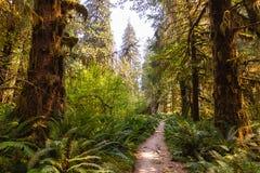 Heldergroene weg die diep in de zomerbos leiden royalty-vrije stock afbeelding