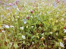 Heldergroene zonnige gras en klaverbloesems Royalty-vrije Stock Foto's