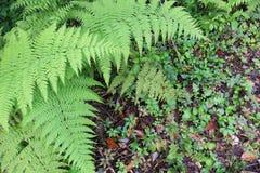 Helecho bonito con la vegetación verde abajo foto de archivo