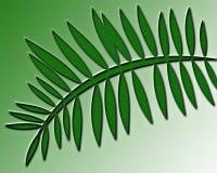 Helecho contra un fondo verde Fotos de archivo