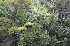 Helecho de árbol en Bush imagen de archivo libre de regalías