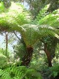 Helecho de árbol en sol brillante Imagen de archivo