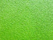 Helecho de agua verde natural del azolla Imagen de archivo libre de regalías