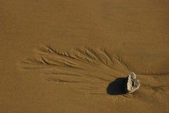 Helecho de la roca fotografía de archivo