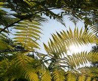 Helecho debajo del cielo azul Foto de archivo libre de regalías