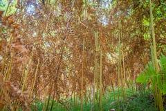 Helecho del otoño Foto de archivo libre de regalías