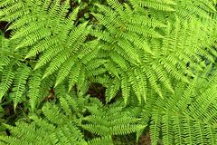 Helecho en bosque Imagen de archivo libre de regalías