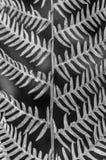 Helecho en cierre blanco y negro abstracto para arriba Corfú Grecia Europa Foto de archivo