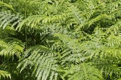 Helecho en el bosque fotos de archivo