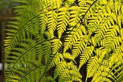 Helecho en el jardín Fotos de archivo libres de regalías