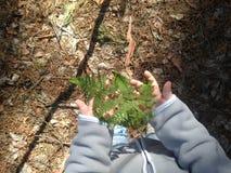 Helecho en las manos del niño en el bosque Imágenes de archivo libres de regalías