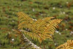 Helecho en otoño, Westfalia, Alemania Imagenes de archivo