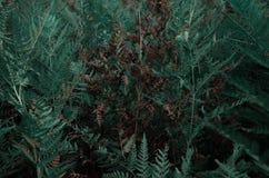 Helecho en selva tropical imagen de archivo libre de regalías
