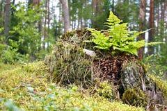 Helecho en un tronco Foto de archivo libre de regalías