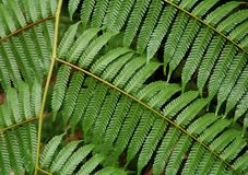 Helecho tropical imagen de archivo