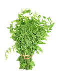 Helecho vegetal aislado en el fondo blanco imagenes de archivo