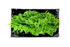 Helecho vegetal en el plato aislado en el fondo blanco Imagen de archivo libre de regalías