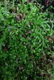 Helecho verde Imágenes de archivo libres de regalías