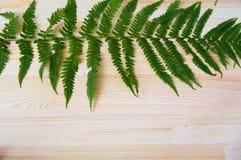 Helecho verde Fotos de archivo