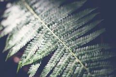 Helecho verde de la hoja, fondo natural abstracto y textura en oscuridad fotografía de archivo