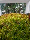 Helecho verde en la casa de cristal Imagen de archivo