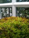 Helecho verde en la casa de cristal Fotos de archivo