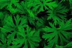 Helecho verde jugoso imagenes de archivo